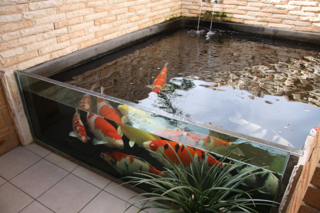 bassin de jardin vitre